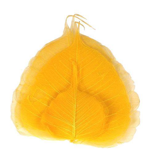 Pastell-goldgelbe Willowbl�tter, auch als Skelettbl�tter oder Schleierbl�tter bezeichnet, werden als Bastelbl�tter, als Zubeh�r f�r die Trockenfloristik, f�r die Nageltechnik (Nailart), f�r Scrapebooking und zum Basteln verwendet. Bei den Willowbl�ttern wurde die Blattoberfl�che entfernt, so dass nur noch das dekorative, filigrane Blattgerippe �brig bleibt. Die Gr��e der Skelettbl�tter schwankt zwischen ca. 7 - 12 cm. Preis pro Beutel mit 10 St�ck. HVE 3 Willowbl�tter f�hren wir in vielen aktuel