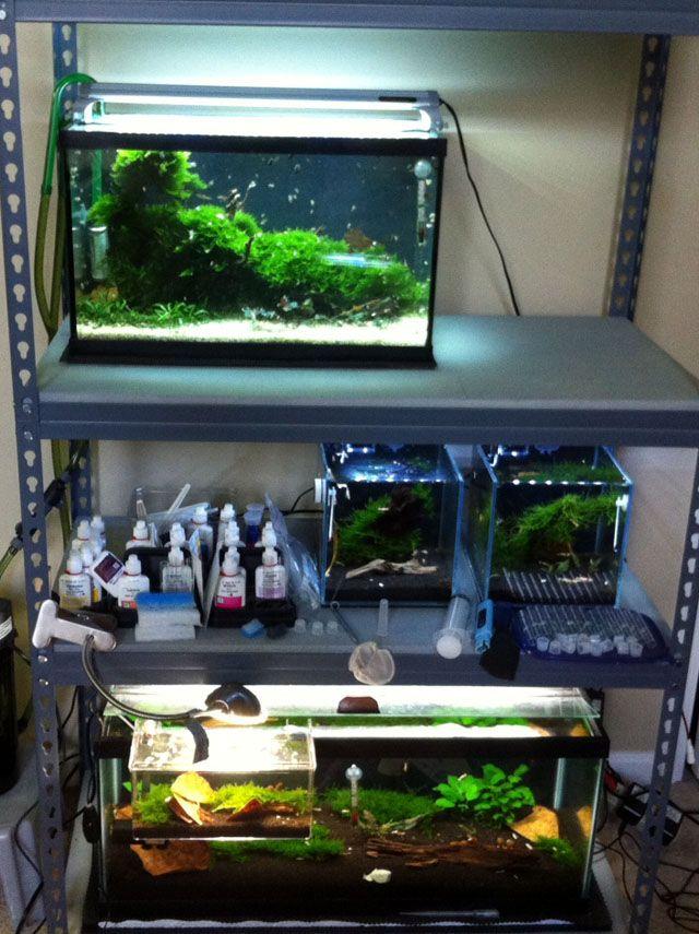 Shrimp Tank Rack Google Search Aquarist Shrimp Tank