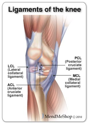 Knee Ligaments Acl Mcl Pcl And Lcl Pt Fun Pinterest