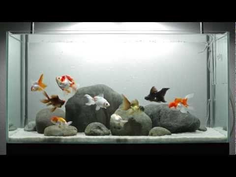 simple rock tank aquariums terrariums pinterest goldfish tank