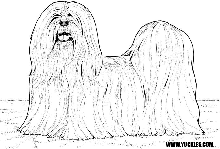 shih tzu coloring page paintings paintings and more paintings