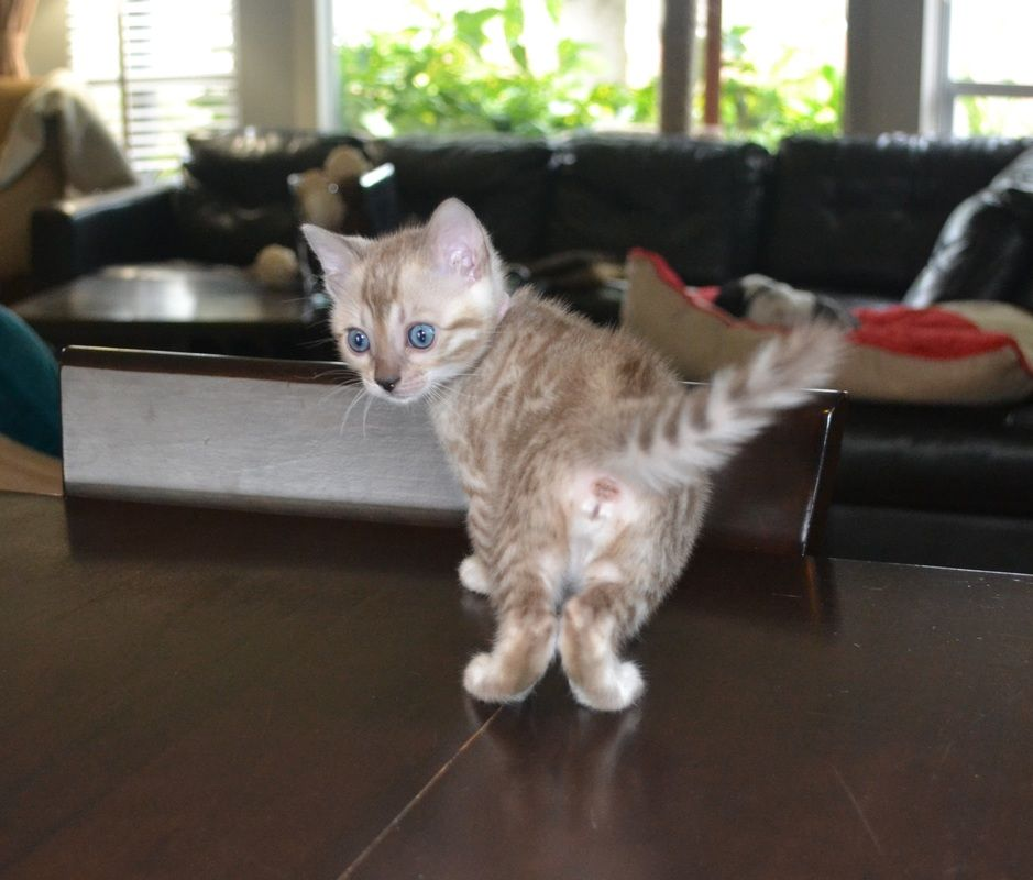 We Have Three New Litters Of Kittens At The Moment Cameo Coco