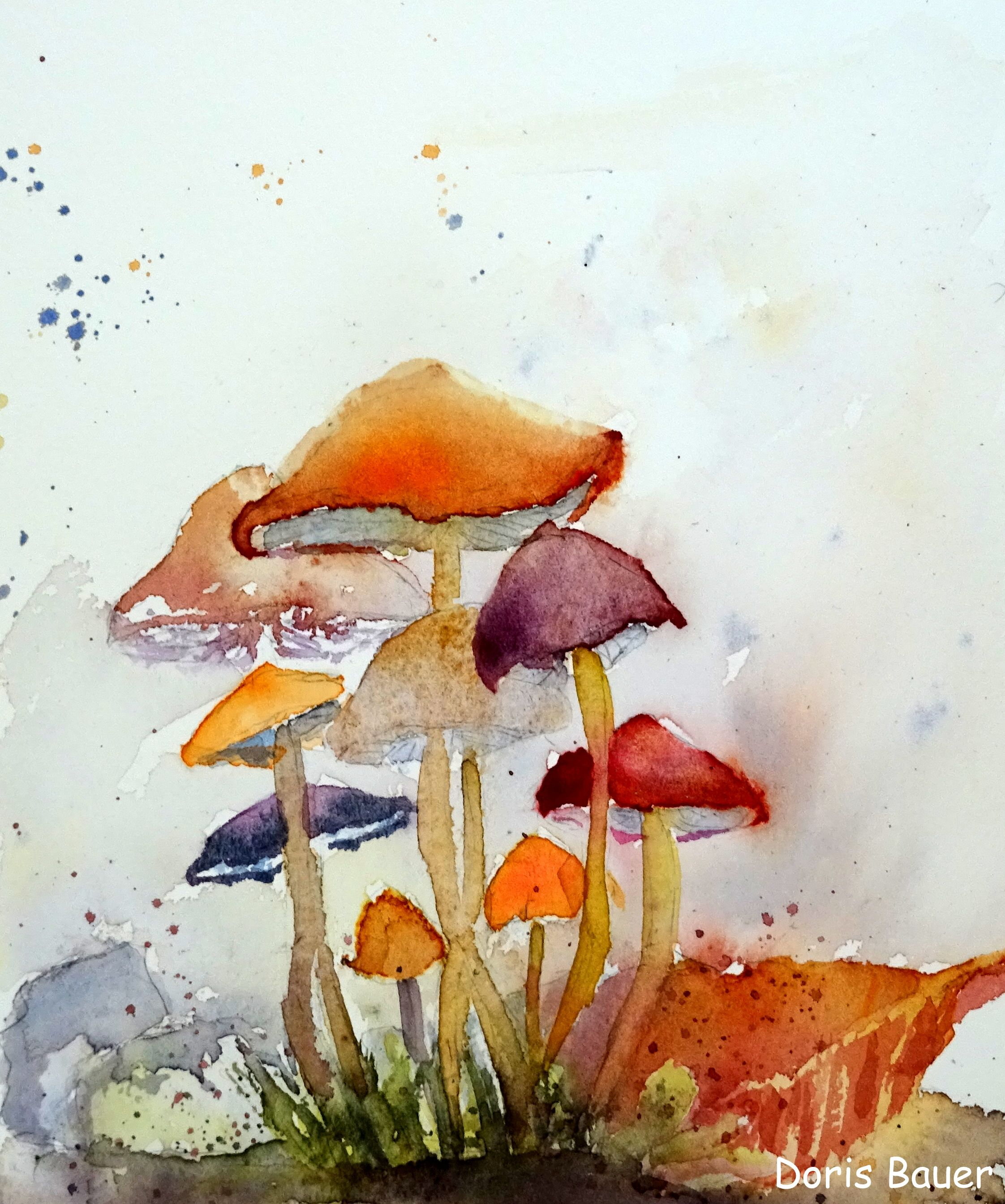 Pilze, Mushrooms