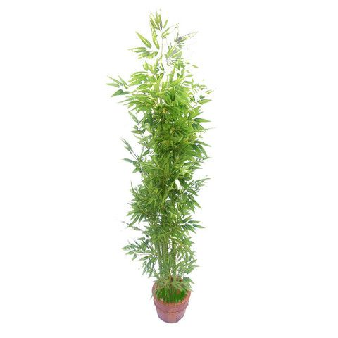 Bamboo Artificial Plant - Novillos Brand