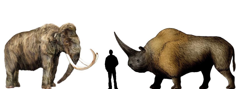 Elasmotherium vs Mammoth | My Happy - 266.0KB