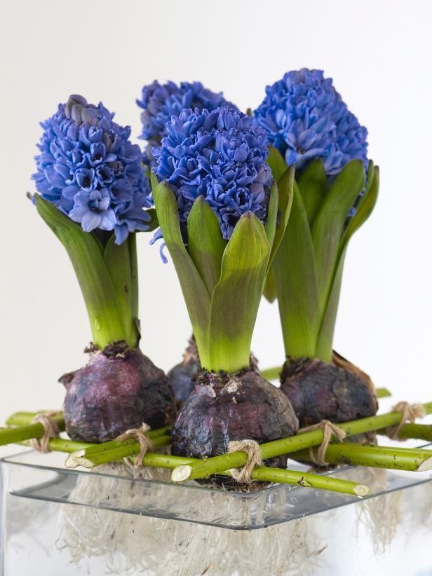 comment planter et forcer les bulbes plumetis magazine. Black Bedroom Furniture Sets. Home Design Ideas