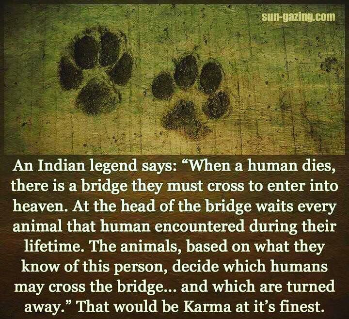 """""""An Indian legend says, 'When a human dies, there is a"""