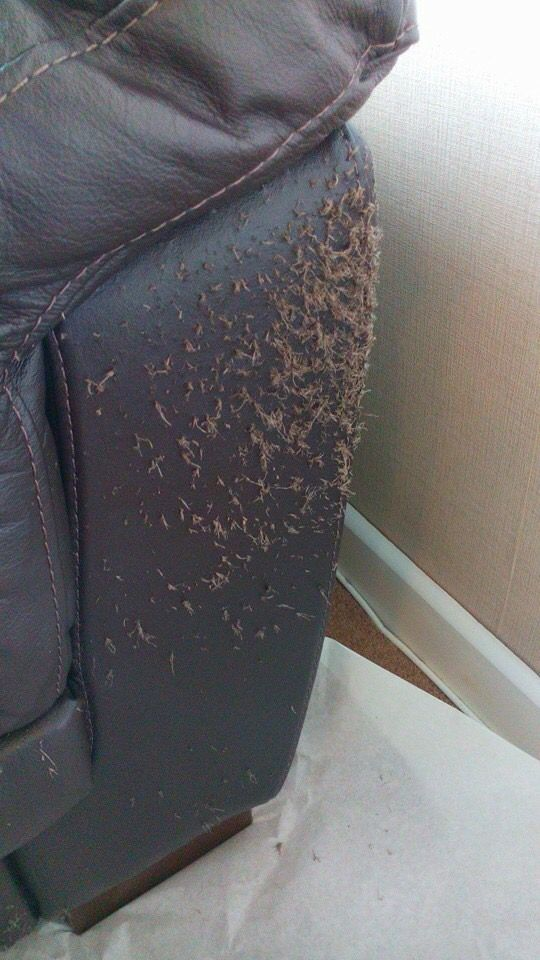 how to repair a leather sofa from cat scratches erska pin on for the home clean fabric fab