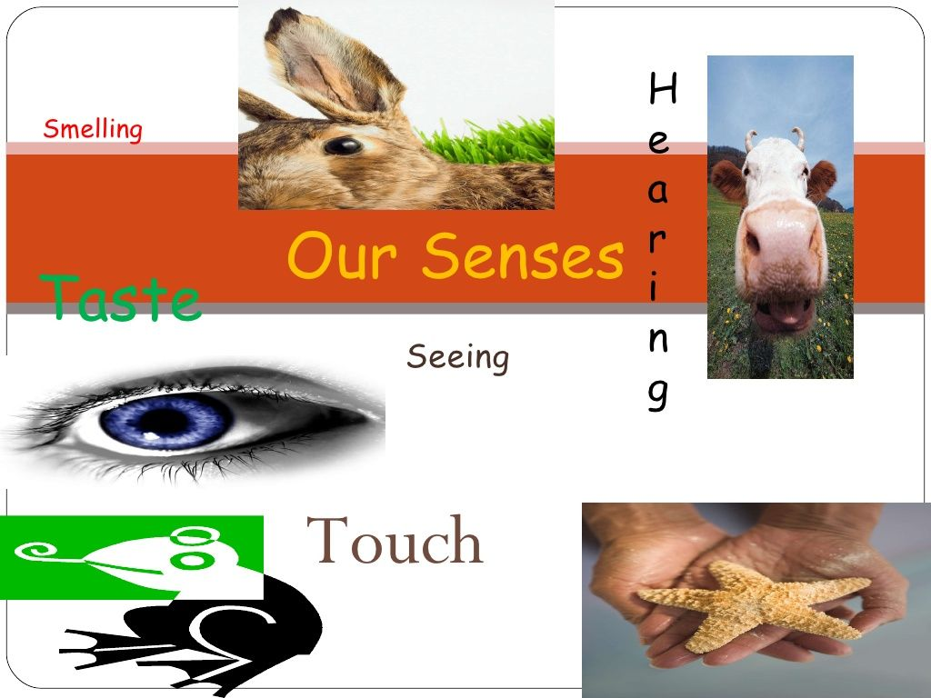 Five Senses Ppt By Rachelbest Via Slideshare