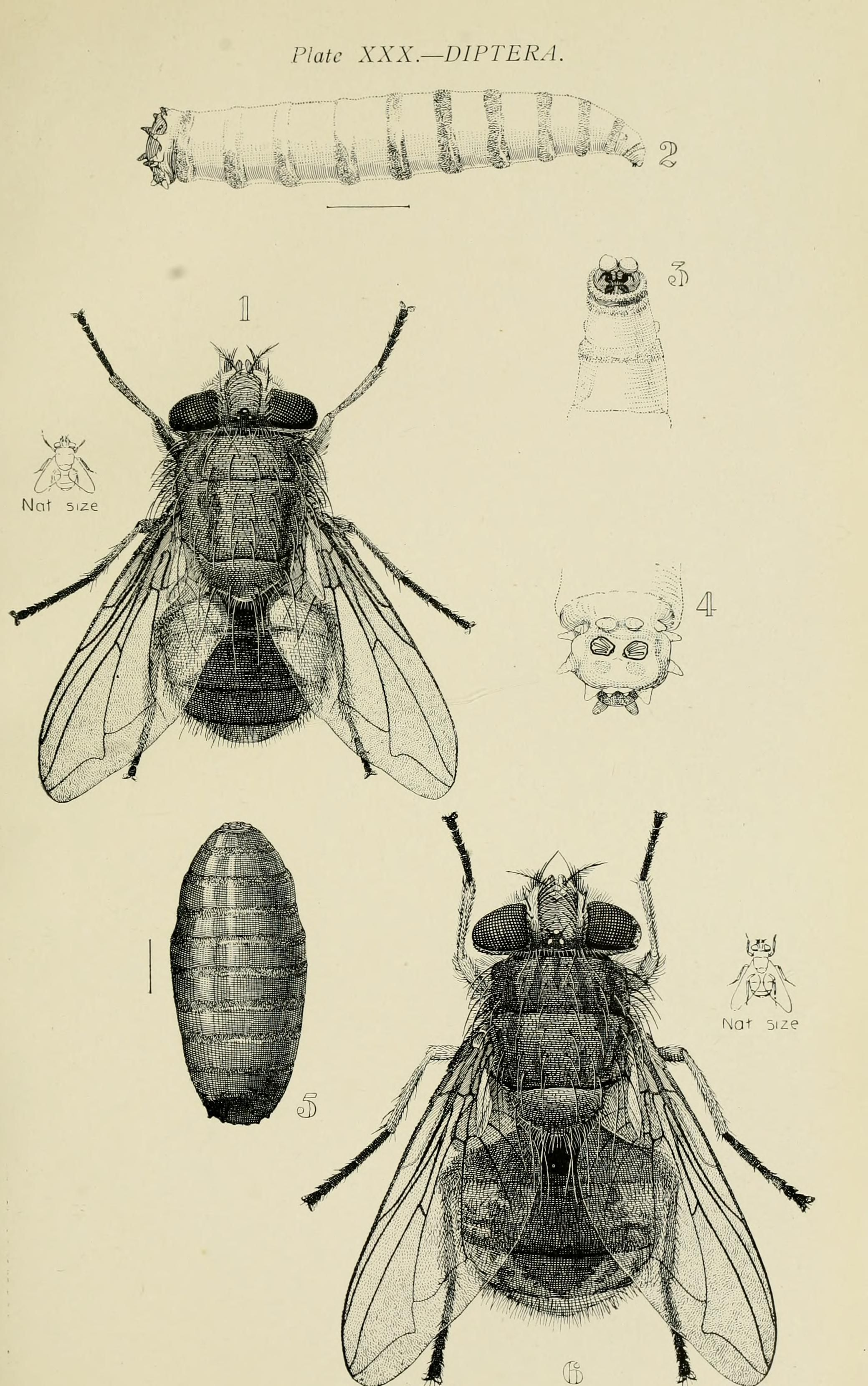 Australian insects. - Biodiversity Heritage Library | etchings ...