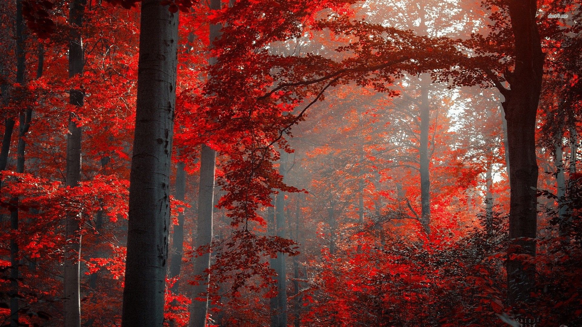 Pin By Casey Screptock On Hello Forest Photography Nature Wallpaper Forest Wallpaper