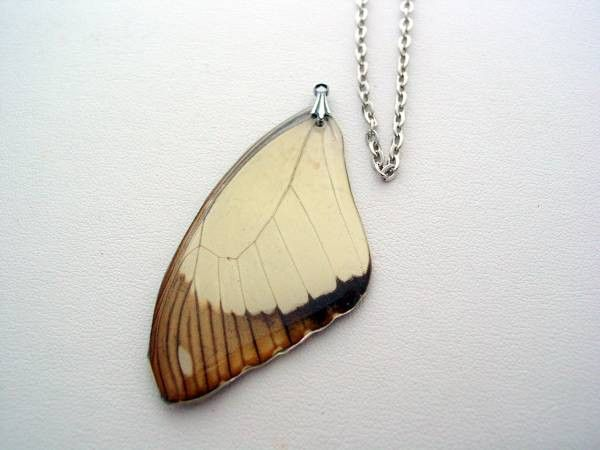 African Swallowtail Real Butterfly Wing Papilio Dardanus Butterfly Jewelry Necklace #4