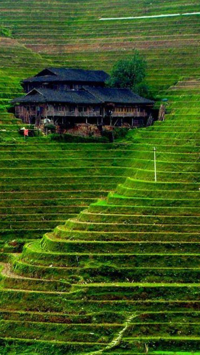 Terrazas Y Cultivos Banaue Rice Terraces Rice Terraces Beautiful Places
