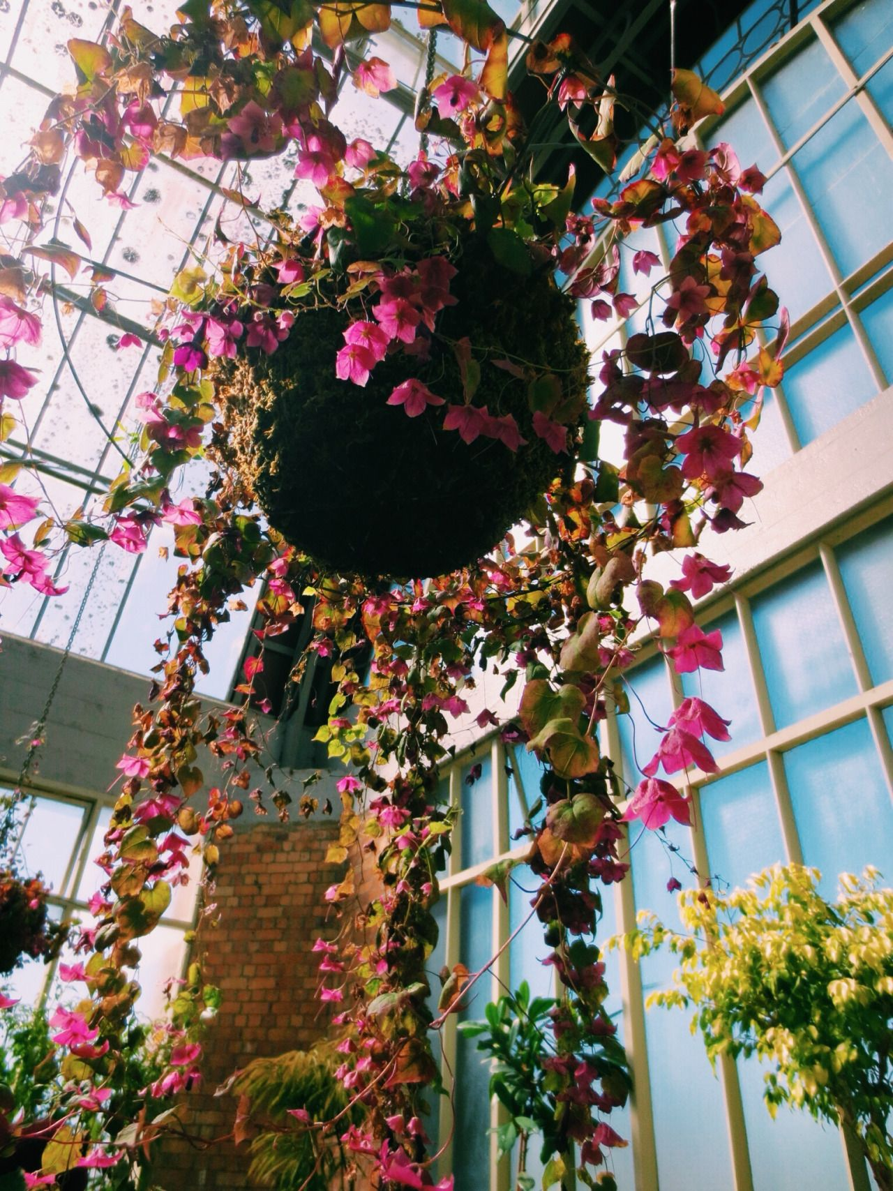 the auckland winter gardens nz i literally fell in love with