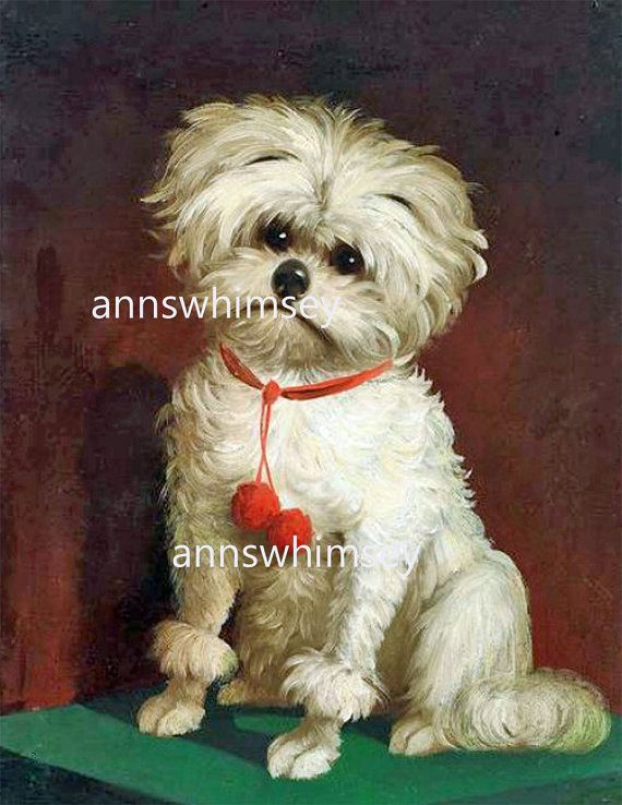 "Art Print Little White Dog ""I HATE Having My Picture Taken"" RESTORED Art Print from Circa 1900 Gift for Dog Lover, Print Child's Room #308"