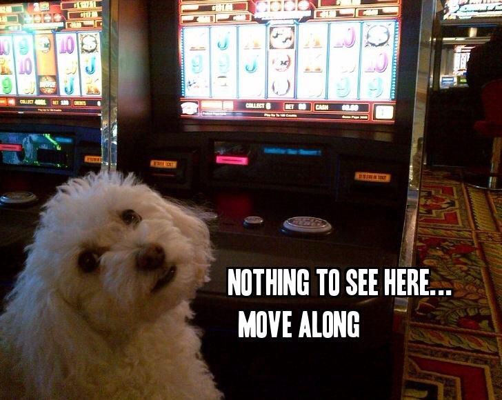 What Happens In Vegas Stays In Vegas Bol Dog Memes Dogs Animals