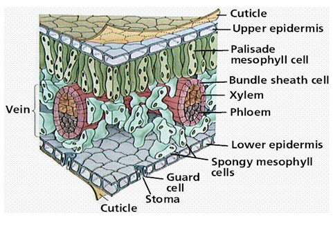 Pin On Plant Structure And Function For Students