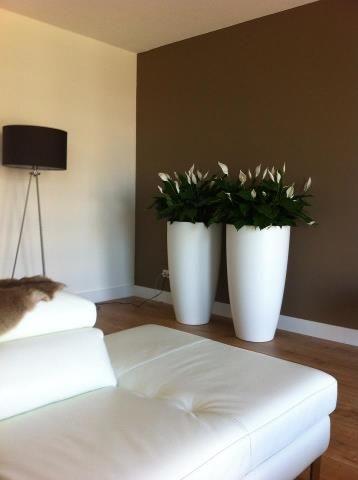 Decoratie Planten Binnen.Beautiful Supermooie Potten Met Planten Bloemen Kamerplanten