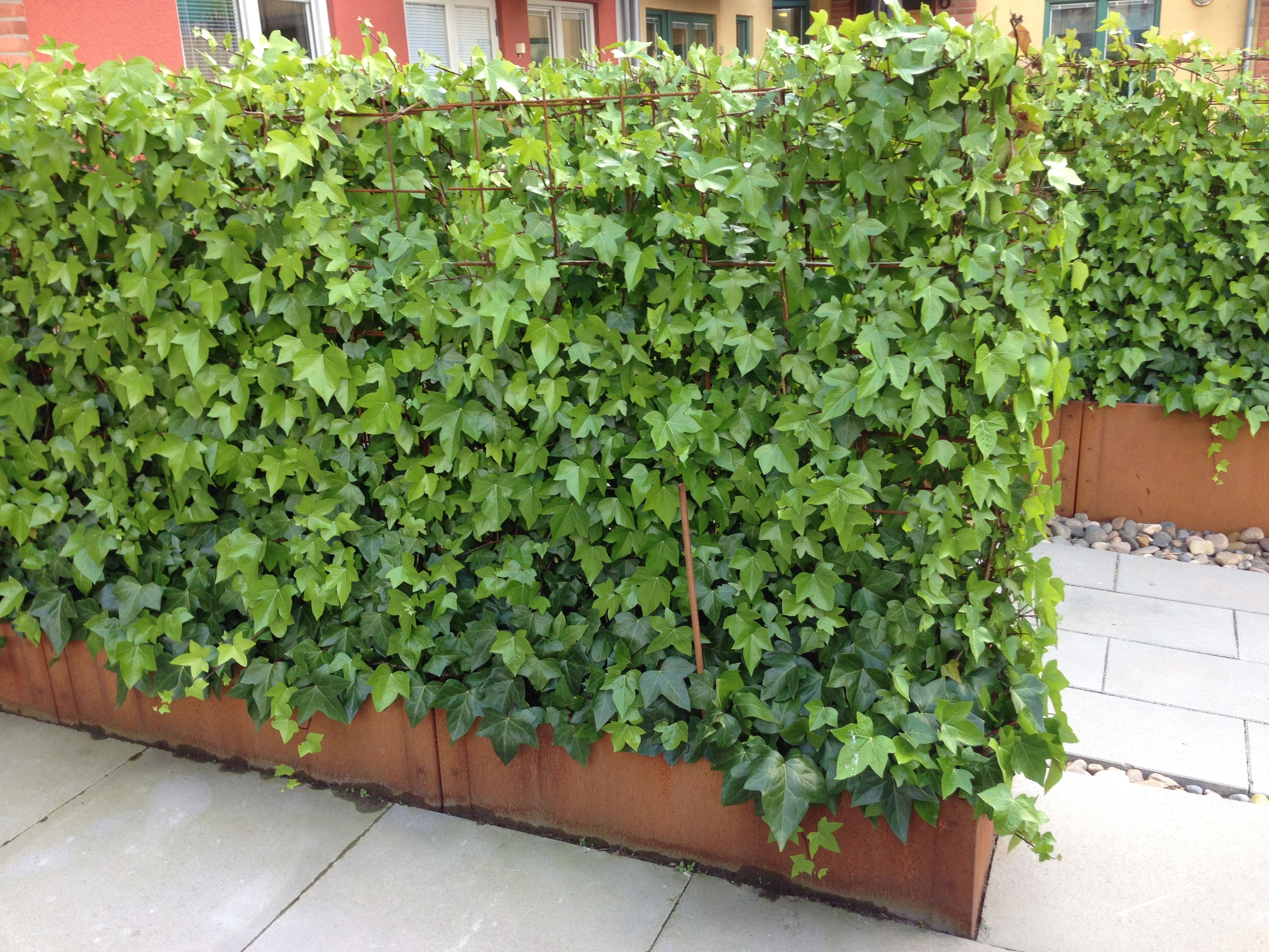 Murgr na h ck gartenabgrenzungen pinterest pflanzen for Gartenabgrenzungen mit pflanzen
