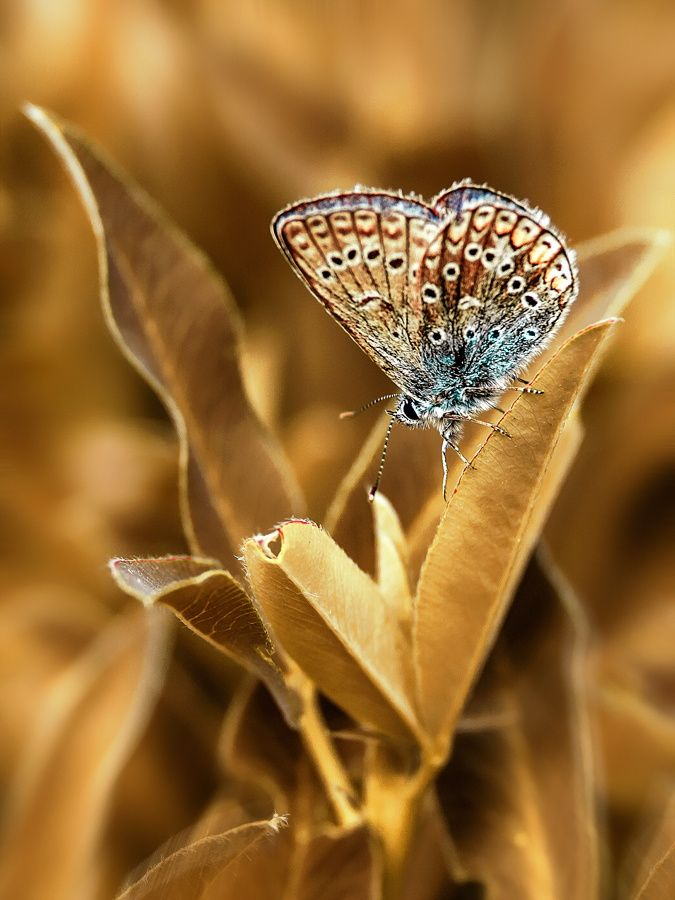 Beautiful butterfly garden nature leaf