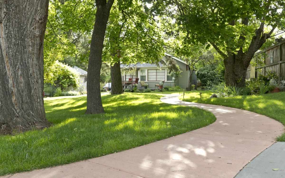 Solved The Best Grass To Grow In Your Shaded Lawn Best Grass For Shade Shade Grass Shade Tolerant Grass