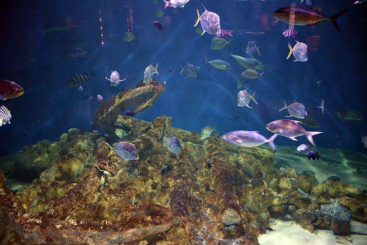 North Carolina Aquarium-Pine Knoll Shores | North carolina ...
