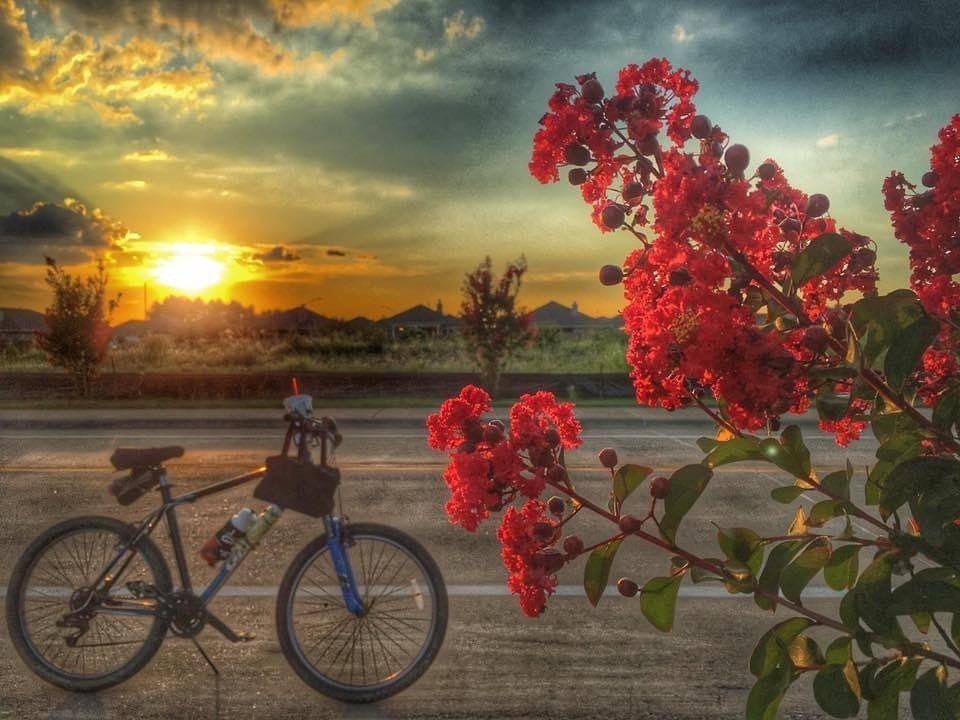 #sunset  #biking  #crepemyrtle  #flowerlovers  #clouds