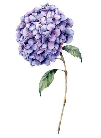 Watercolor Violet Hydrangea Hand Painted Blue Flower With Leaves Hydrangea Painting Blue Flower Painting Flower Art Drawing