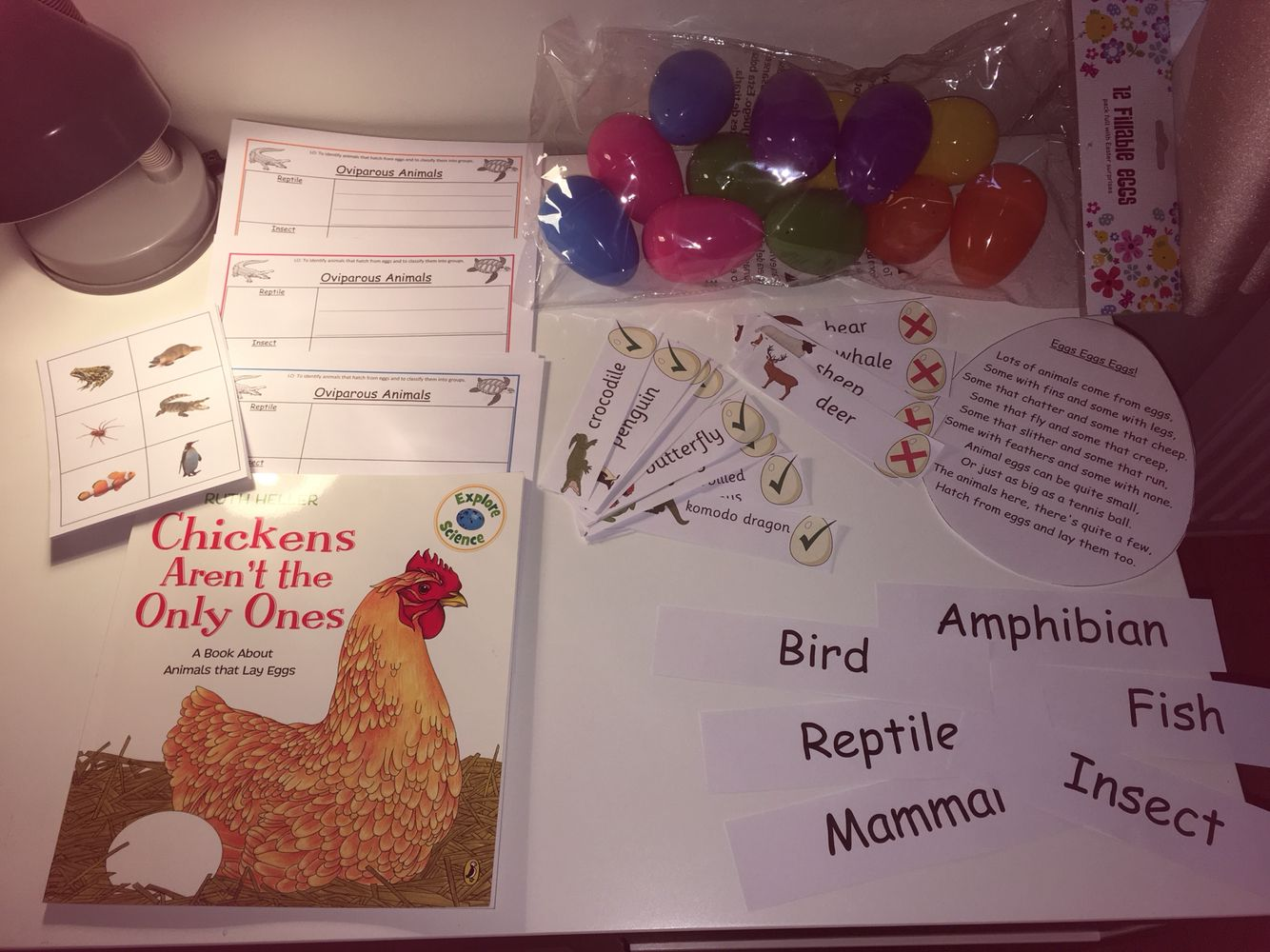 All Ready For My Lesson Tomorrow On Animals That Hatch
