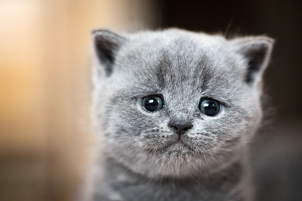 картинки грустного плачущего котенка
