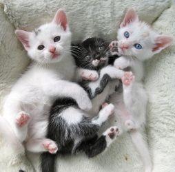 kittiessssss!