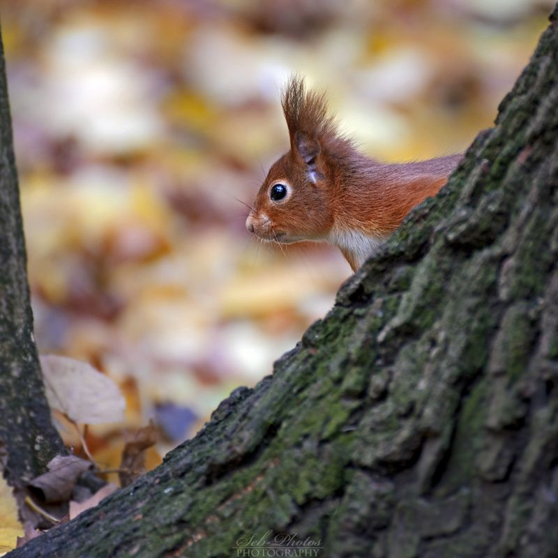 Peek-A-Boo by Seb-Photos on deviantART