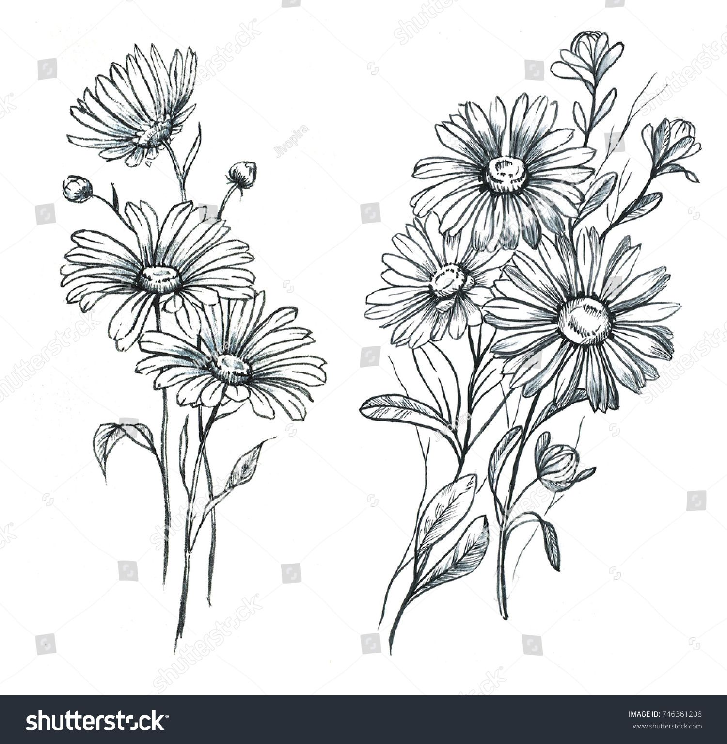 Hand Drawn Line Art Watercolor Chamomile Stock Illustration 746361208 In 2020 Aster Flower Tattoos Daisy Flower Tattoos Flower Drawing