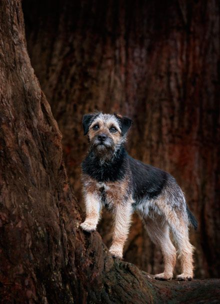 Dog Photography Dog Photographer Ayrshire Edinburgh Dog