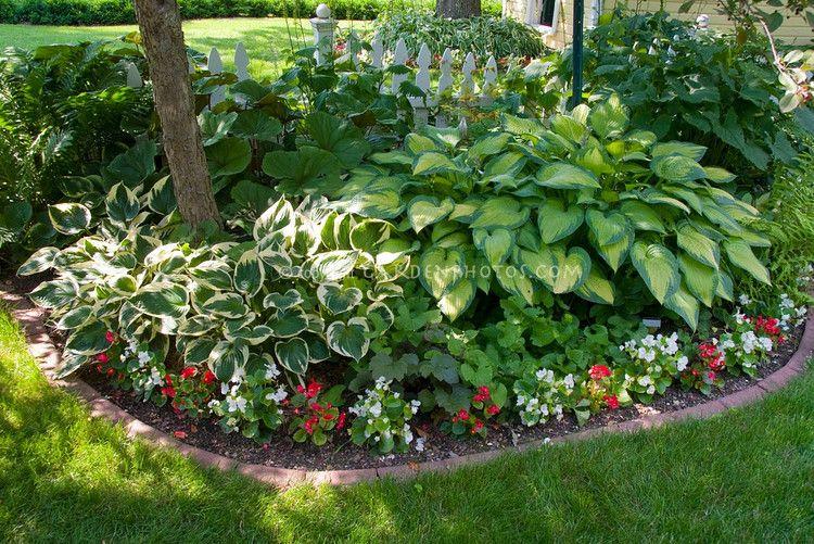 Shade garden with mostly foliage plants hostas begonias for Partial shade garden designs
