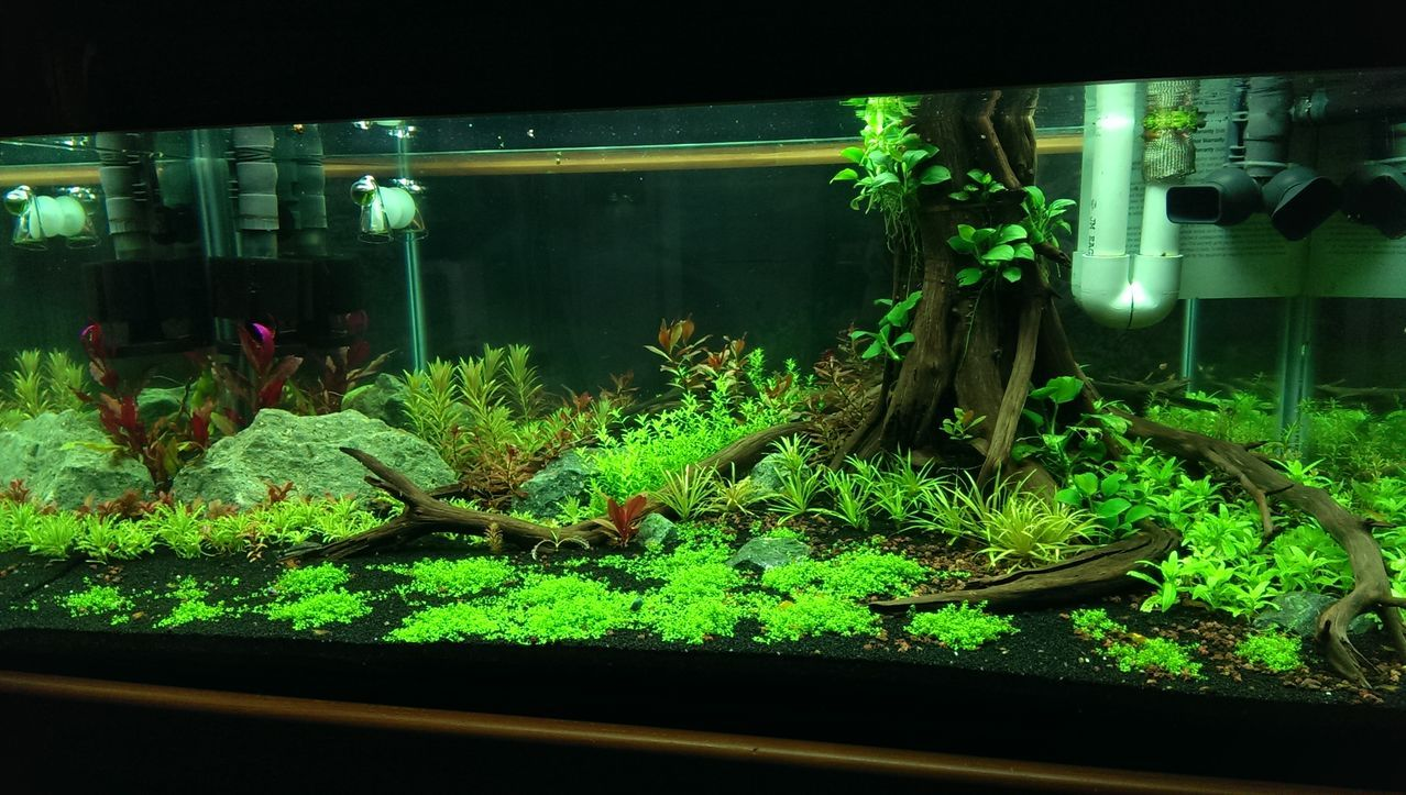 Terrarium 40 gallon breeder google search crabitat for Fish tank terrarium