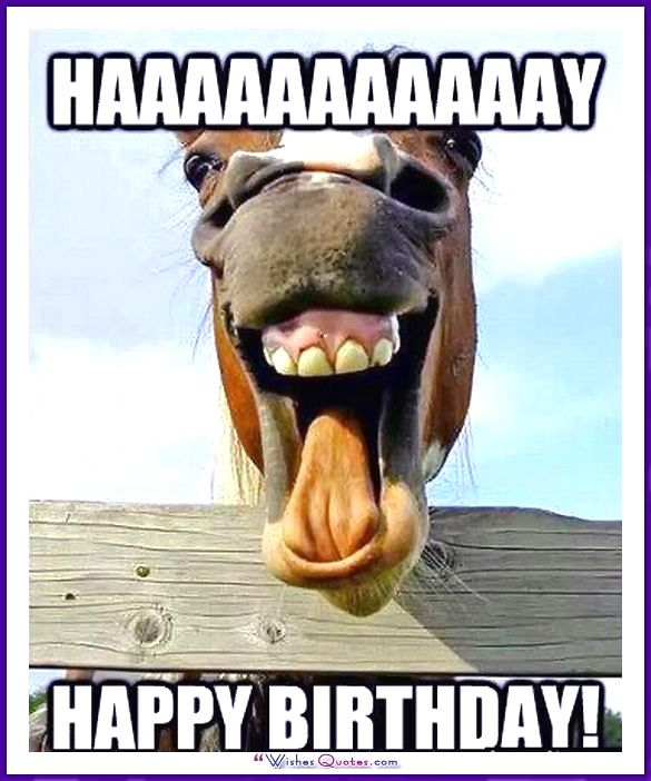 Happy Birthday Memes With Funny Cats Dogs And Animals Funny Horses Laughing Horse Funny