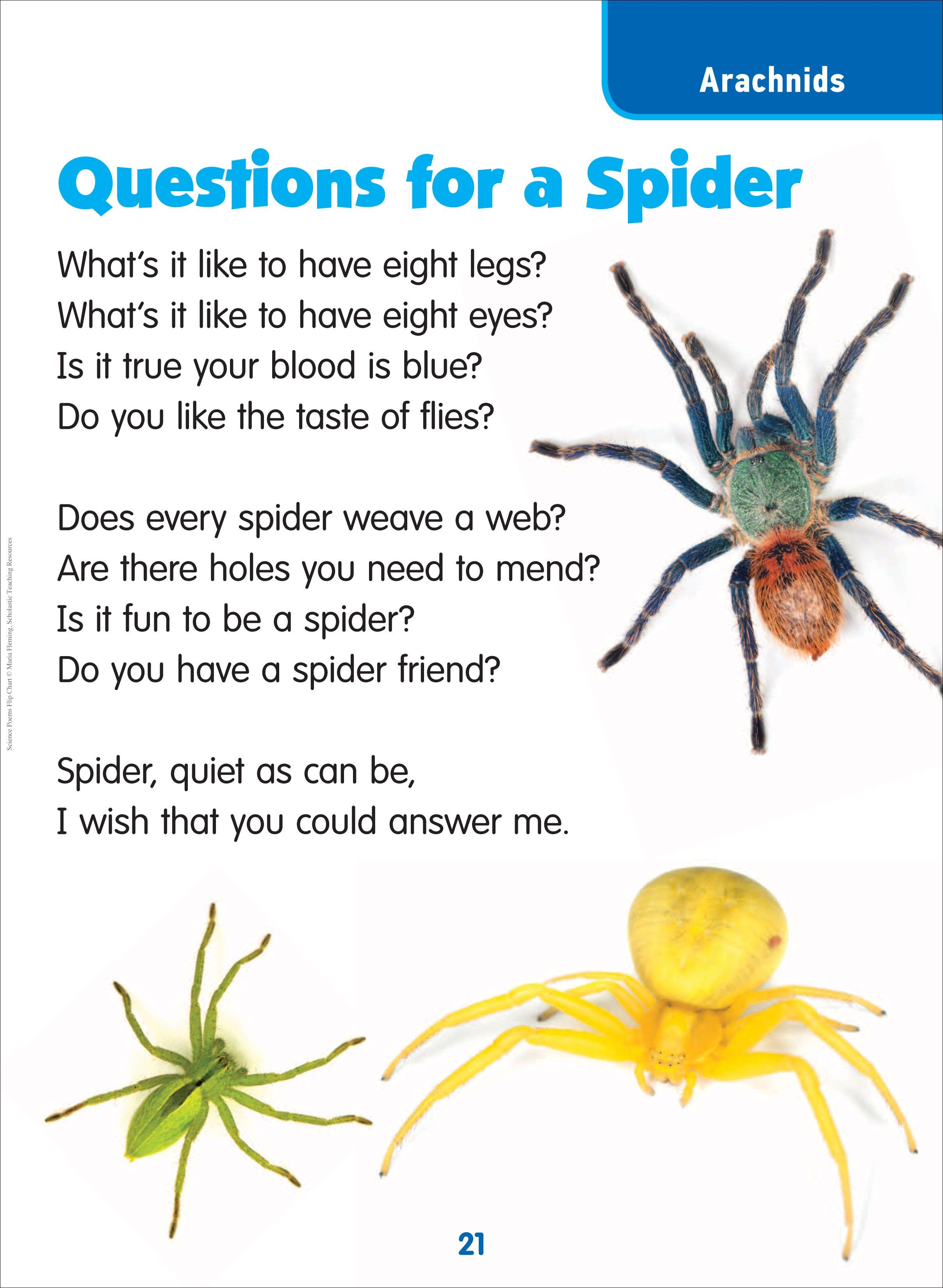 Spider poem anansi stories pinterest spider and literacy spider poem ccuart Image collections