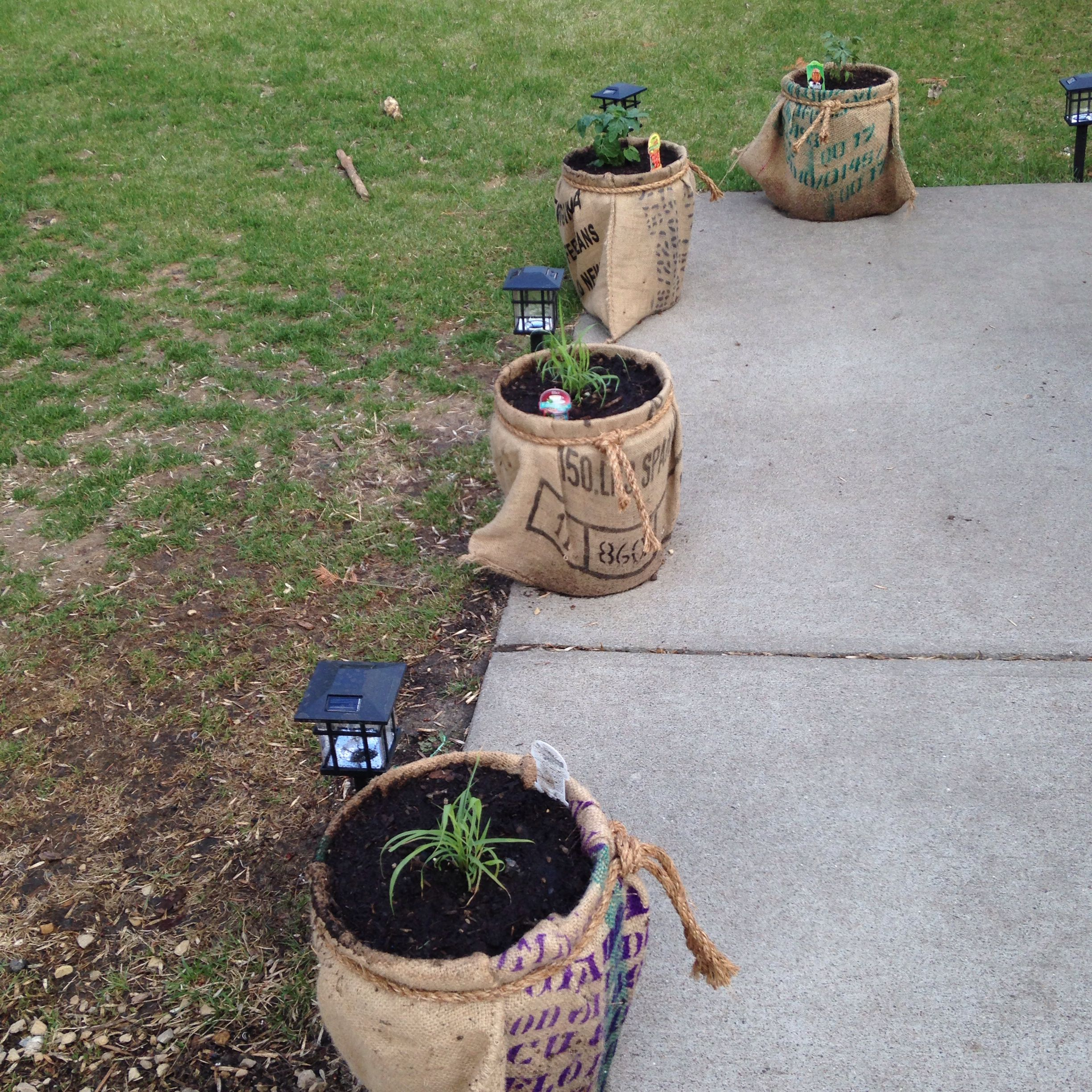 Coffee bean bags, compost, tomatoes and herbs. #garden#containergardening#summer#patio