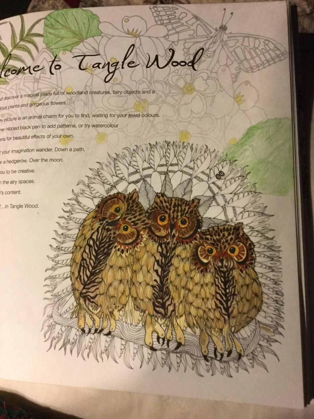 Tangle Wood A Captivating Colouring Book With Hidden Jewels Jessica Palmer 9781782213536