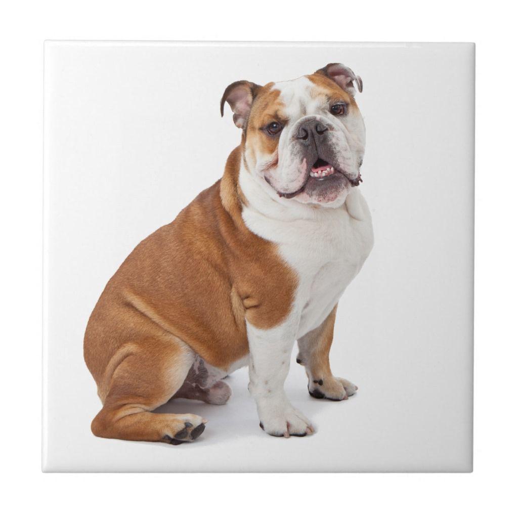 English British Bulldog Tile Zazzle Com Bulldog Breeds