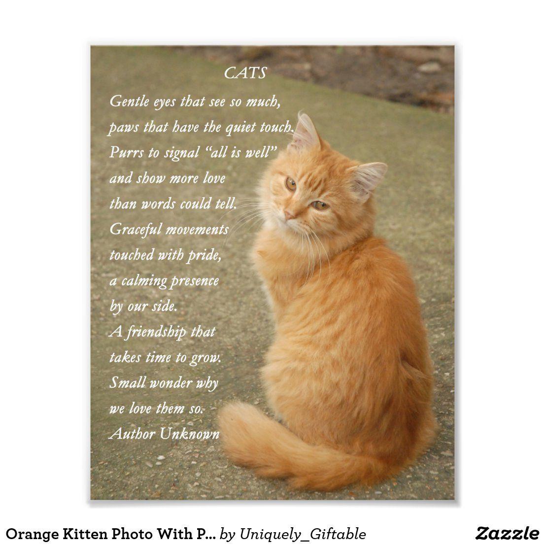 Orange Kitten Photo With Poem Print in 2020