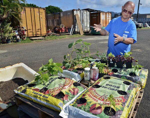 Easy Way To Grow Your Own Easy Garden Organic Gardening Tips