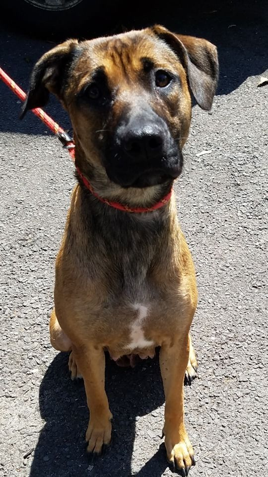 Adopt Nene on in 2020 Help homeless pets, Malinois dog
