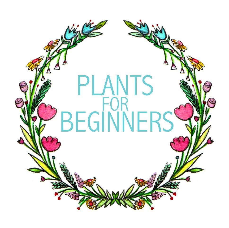 5 Plants For Beginners Plants Flower Garden Container Gardening