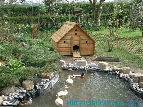 Easy tongue twister in english | Duck house, Backyard ...