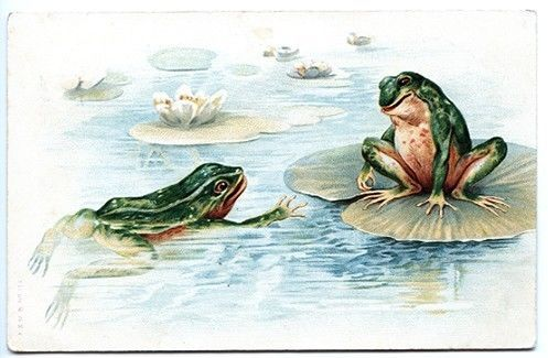 Frogs Frollicking on Lilly Pads! 1908 Postcard