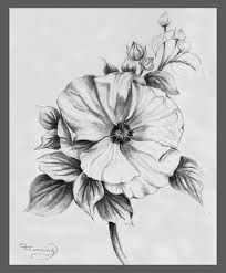 rose of sharon drawing - Google Search | Rose of sharon, Flower tat, Tattoos