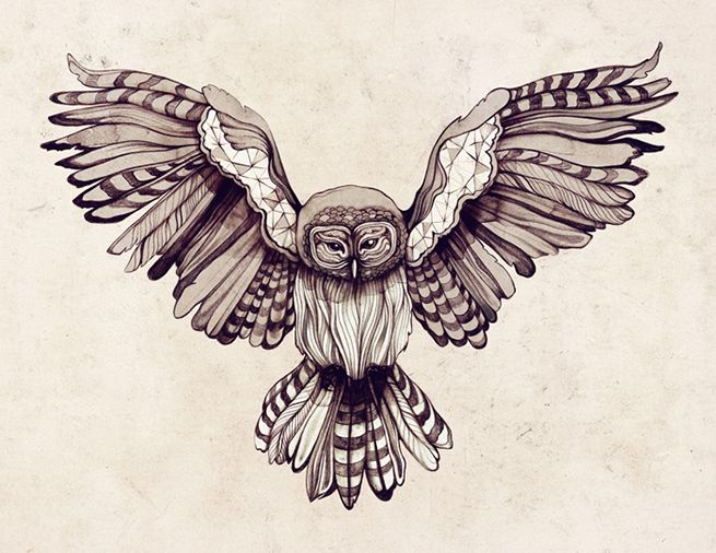 owl drawing. wings spread. stripes. black and white. sara blake