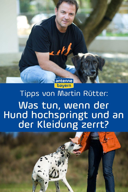 So Ticken Hunde Wirklich Tipps Von Martin Rutter Hunde
